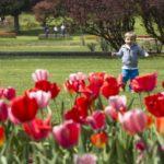 Parco Giardino Sigurtà: tutto quello che c'è da sapere per visitare il parco di Valeggio sul Mincio