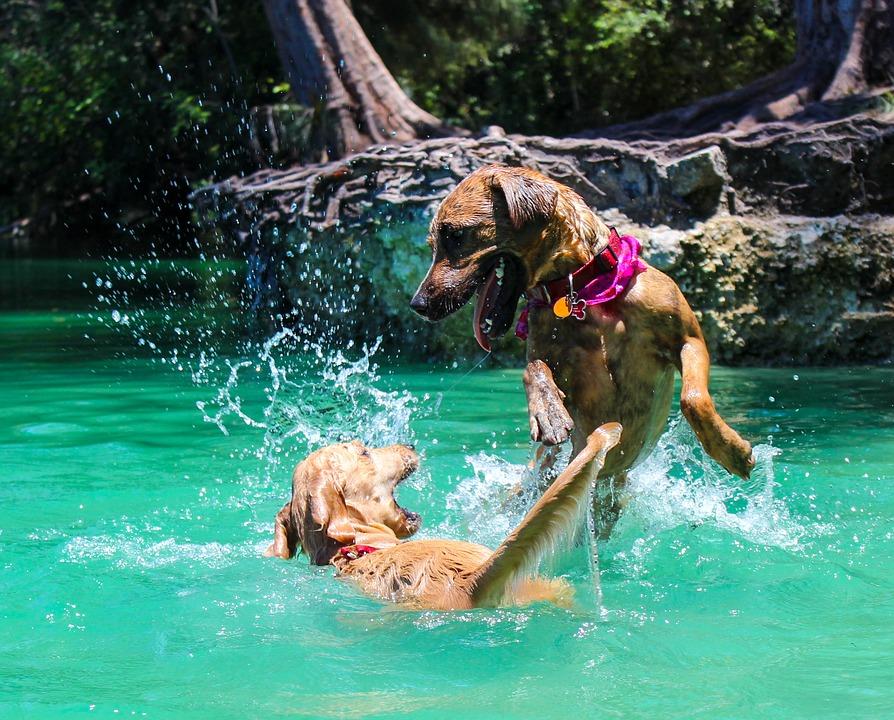 parchi divertimento con accesso ai cani