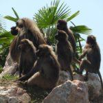 Parco Natura Viva: tutte le info per chi visita il giardino zoologico di Bussolengo